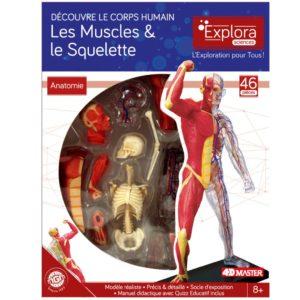 Anatomie squelette et muscles